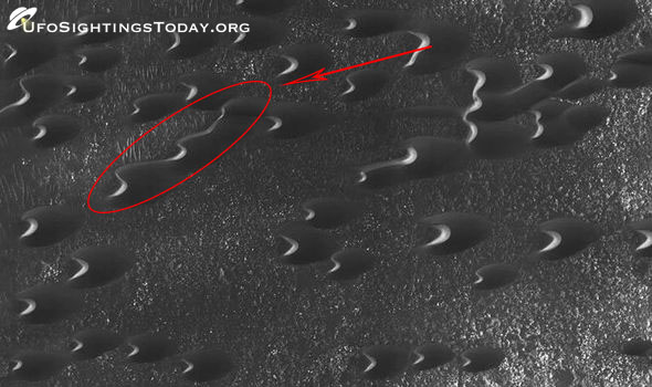 alien snake found on mars